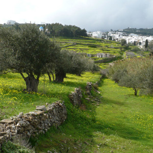 Pezoules and olive trees outside Lefkes