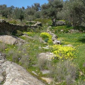 An old footpath at Agrilies area close to Lefkes
