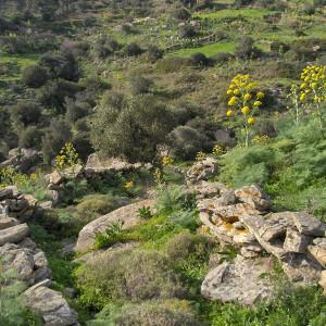 Langada valley footpath in spring, Paros