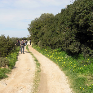 On the dirt road to Naoussa after Xiropotamos river