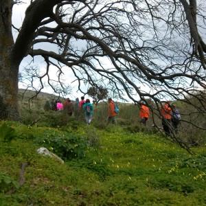 By the oak tree in wintertime, Paros