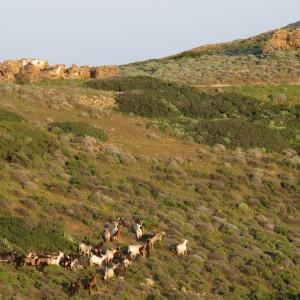 On the footpath to Monastiria, Antiparos