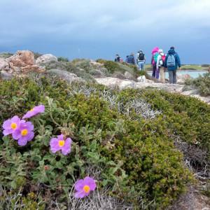 Cistus, thyme and cedar on the north coast, Antiparos