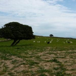 Along the way to Sifneikos Gialos, Antiparos island