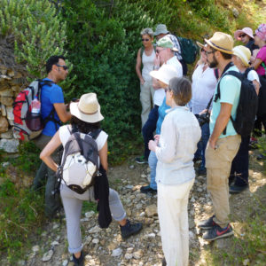 Walking & discussing herb properties on the Parian Herbs, Cheese & Wine Tour, Paros island, Greece.