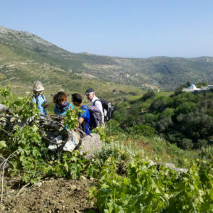 Walking and talking about the grapevine on the Parian Herbs, Cheese & Wine tour, Paros island, Cyclades, Greece .